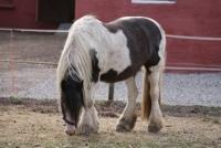 OVervågning af hest